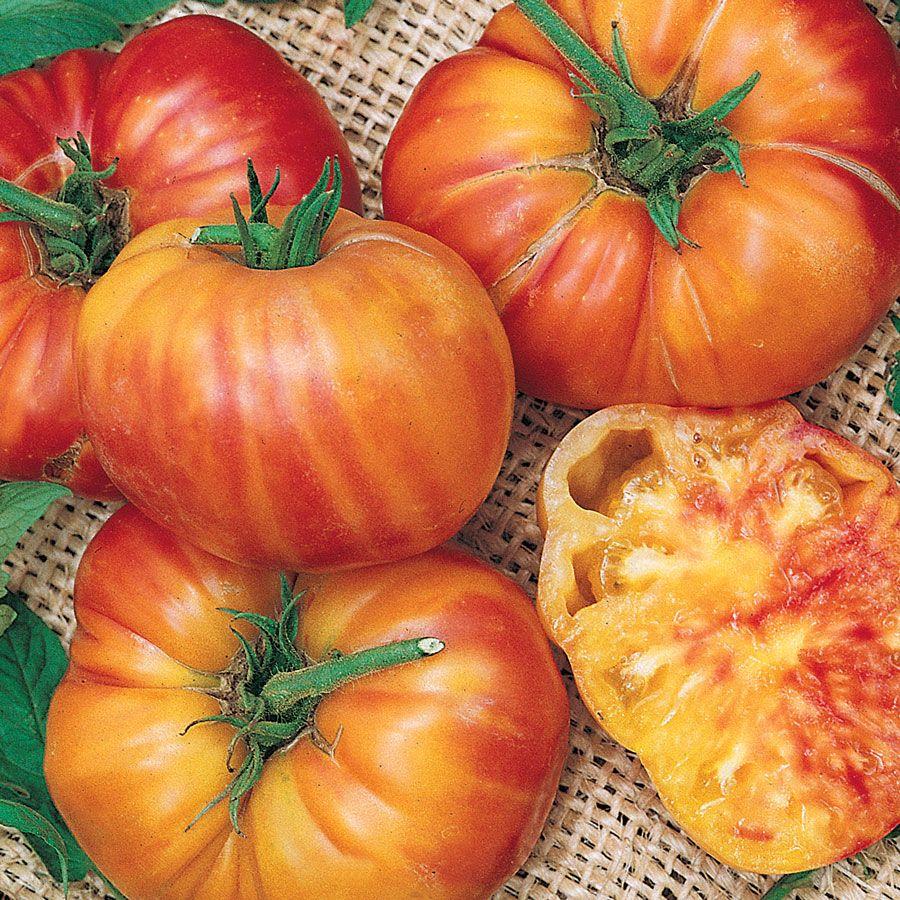 Big Rainbow Tomato Seeds Image