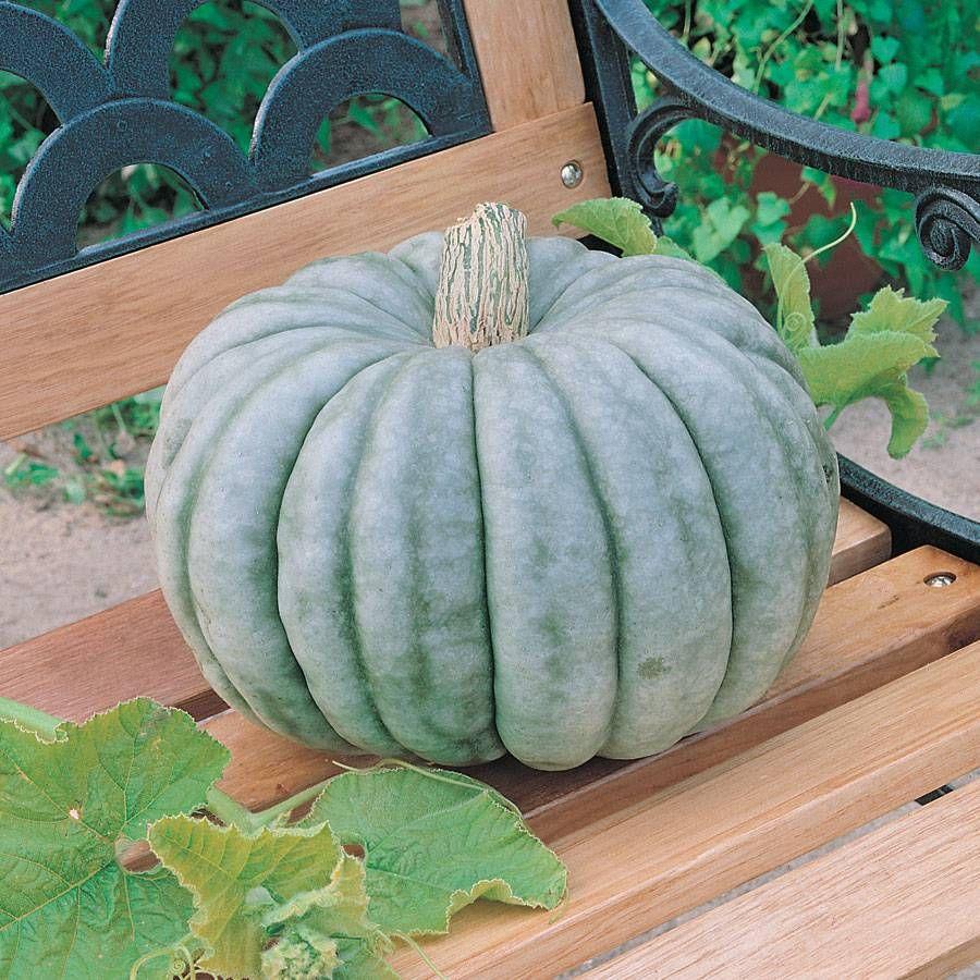 Jarrahdale Pumpkin Seeds Image