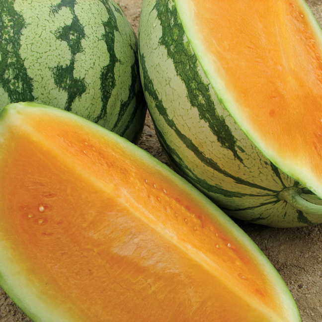 Watermelon Varieties Pictures