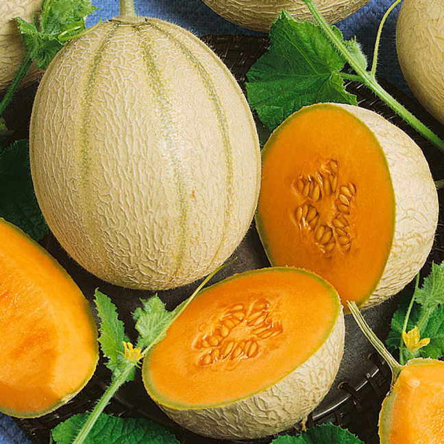 Inspire Hybrid Cantaloupe Seeds Cantaloupe's cultivation is widespread throughout the world, including asia and europe.2 in the u.s sometimes, it's difficult to know when cantaloupes are ready for consumption, but there are a few. inspire hybrid cantaloupe seeds
