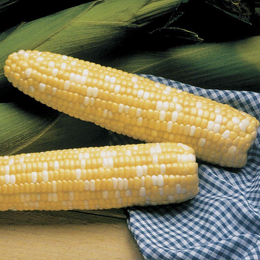 Serendipity Triplesweet™ Hybrid Sweet Corn Seeds Image