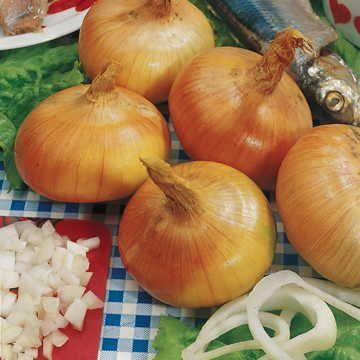 Walla Walla Sweet Onion Seeds Image