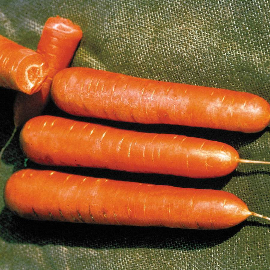 Nantes Organic Carrot Seeds Image