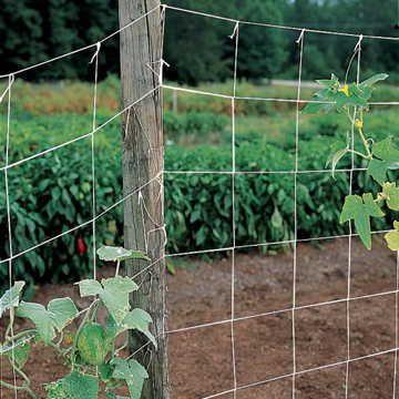 Park's Trellis Netting - 5ft x 30ft Image