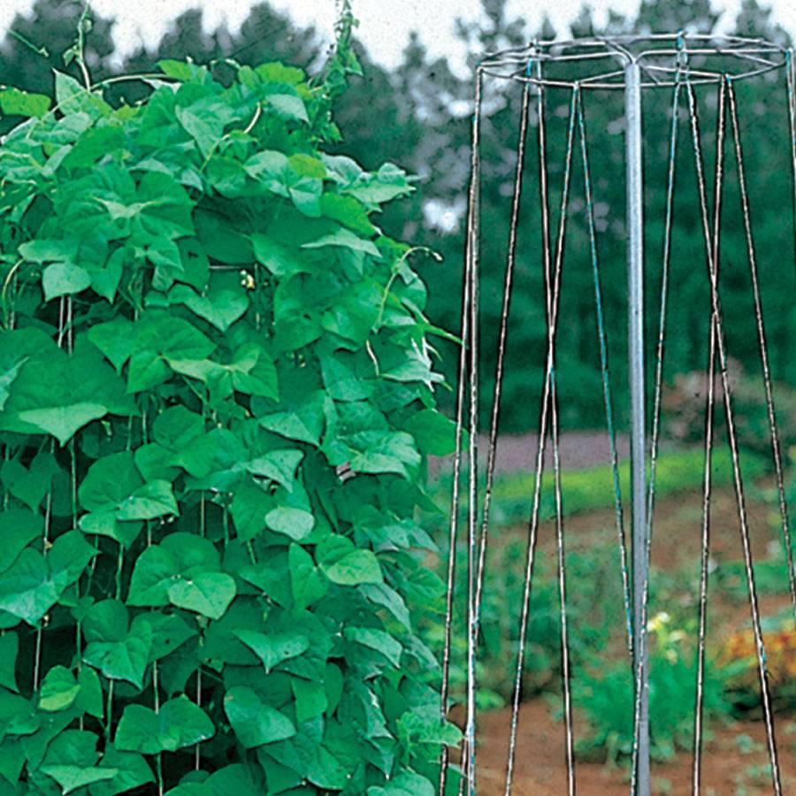 Pole Bean Growing Tower