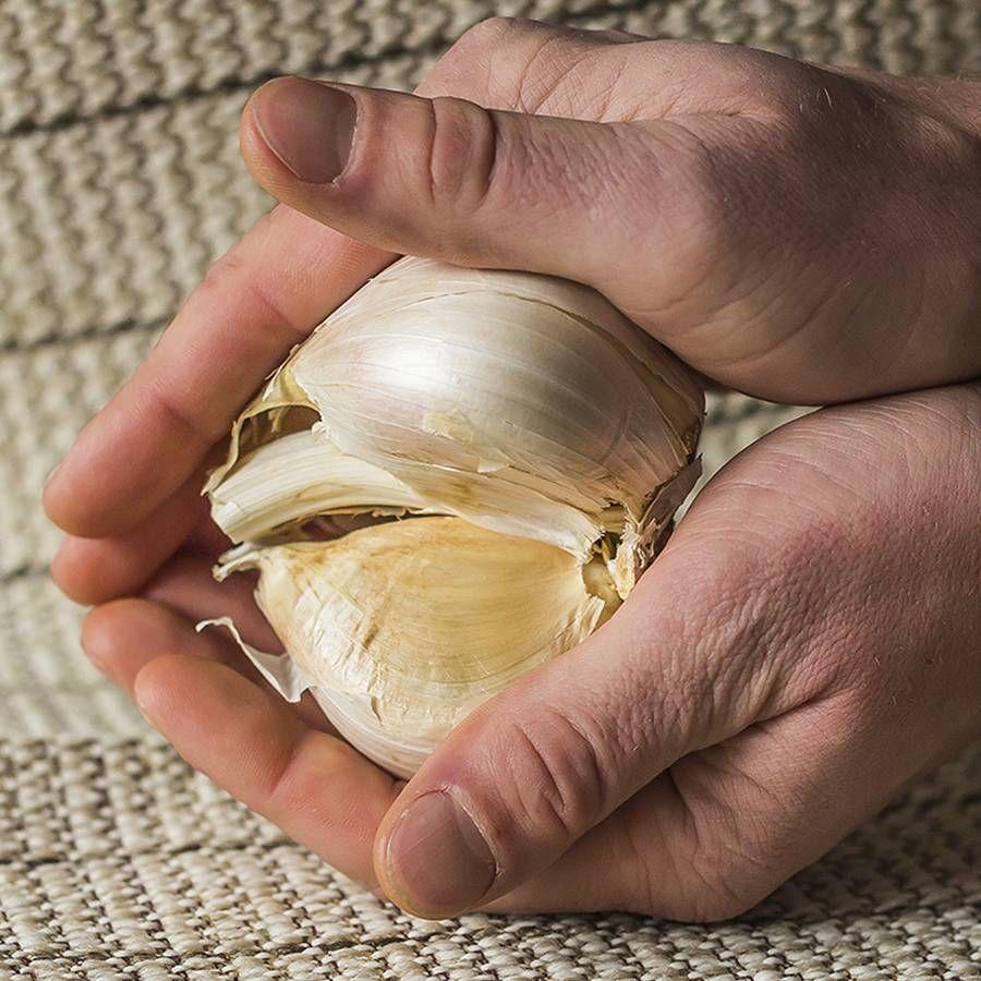 Elephant Garlic Image