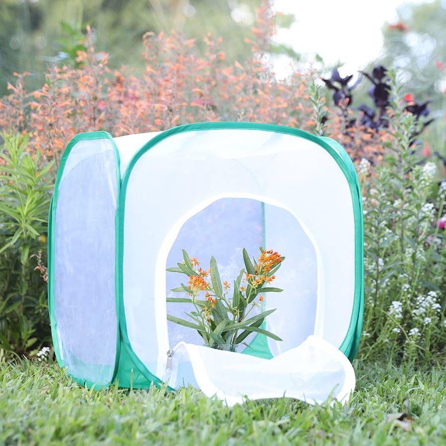Monarch Butterfly Habitat Image