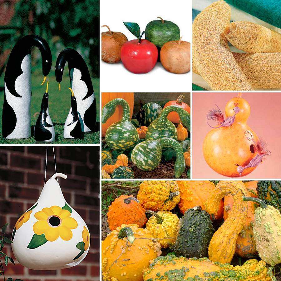 Park's Gourds Seed Collection Image