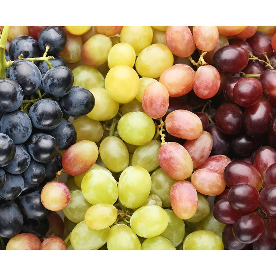 Grape Trio Image