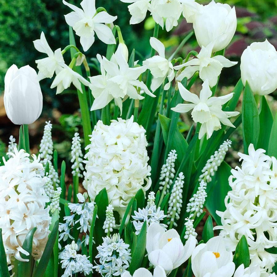 White Garden Bulb Collection Image