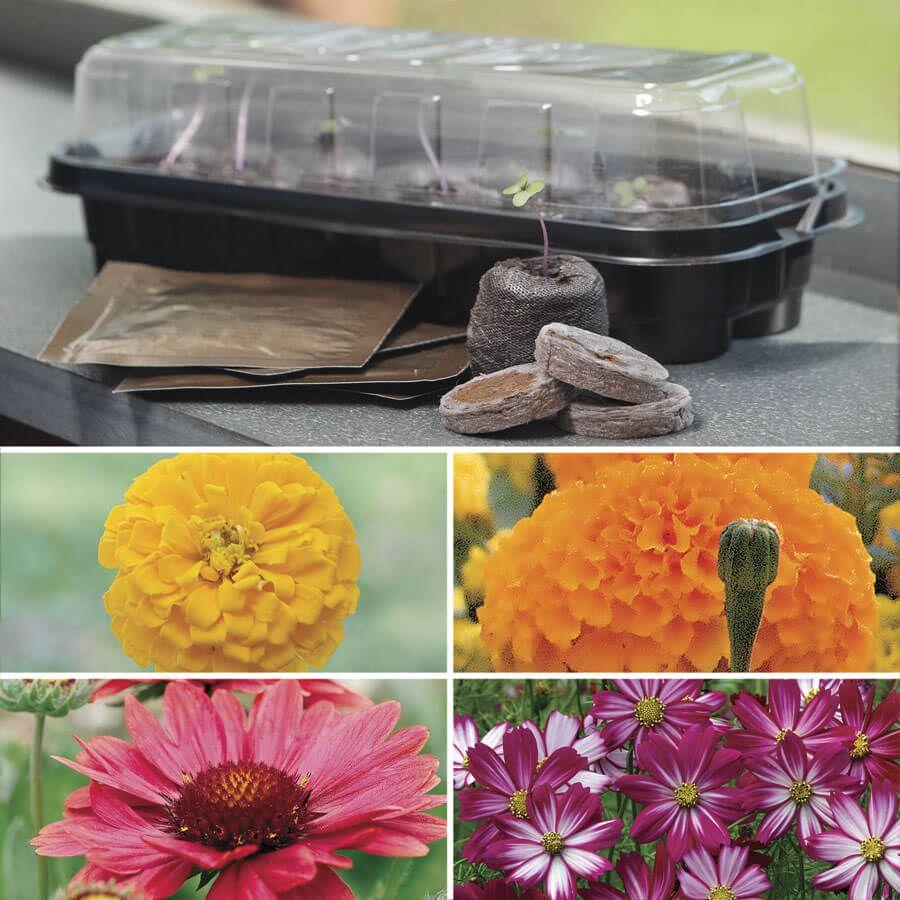 Park's Windowsill Flower Starter Kit Image