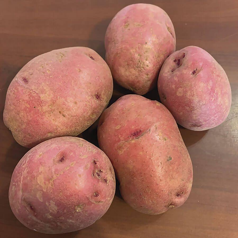 Dark Red Norland Potato - 2LB Bag Image