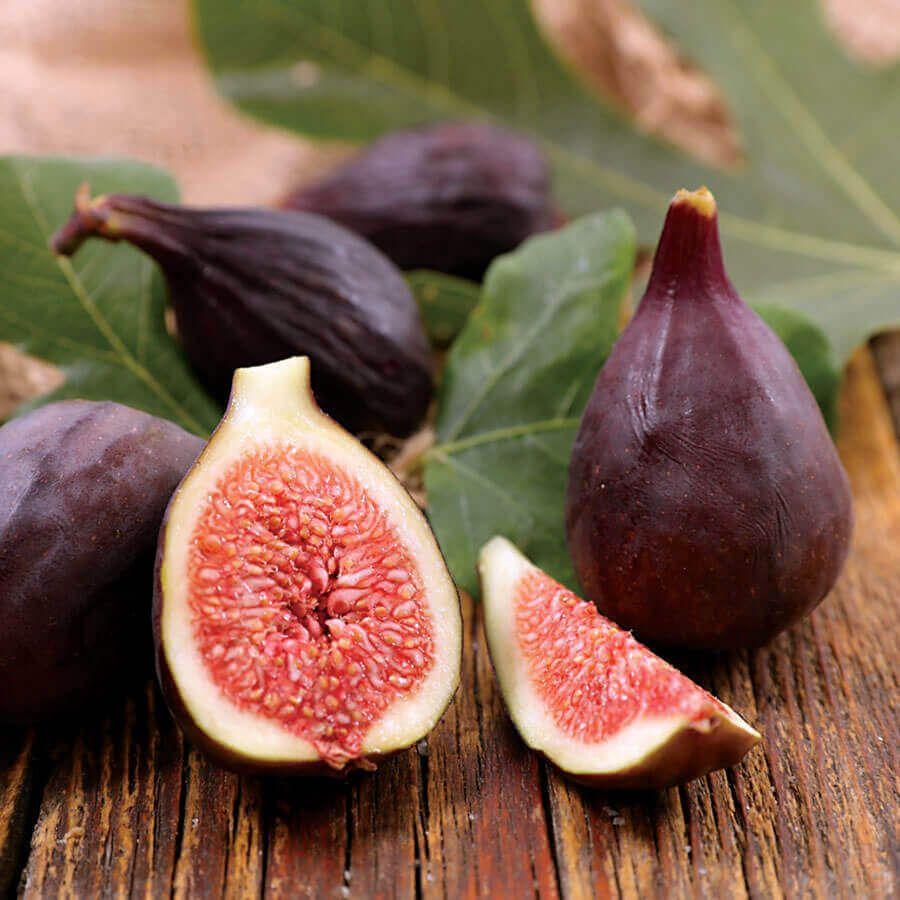 Ficus 'Violette de Bordeaux' Fig Image