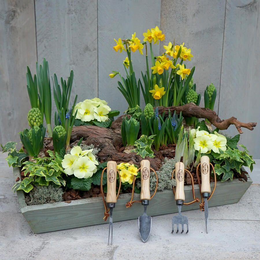 DeWit 4pc Bonsai Tool Set Image