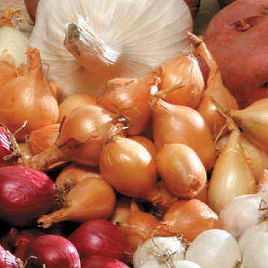 Yellow Onion Bulbs Image
