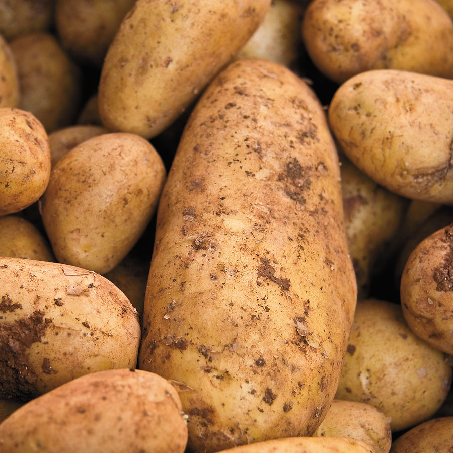 Yukon Gold Potato - 2 LB Bag Image