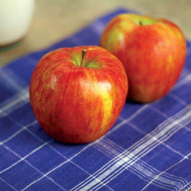 Honeycrisp™ Apple Tree Image
