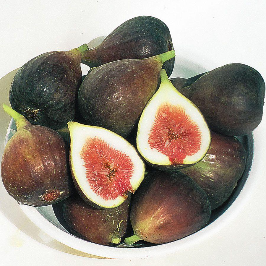Ficus Brown Turkey Fig Image