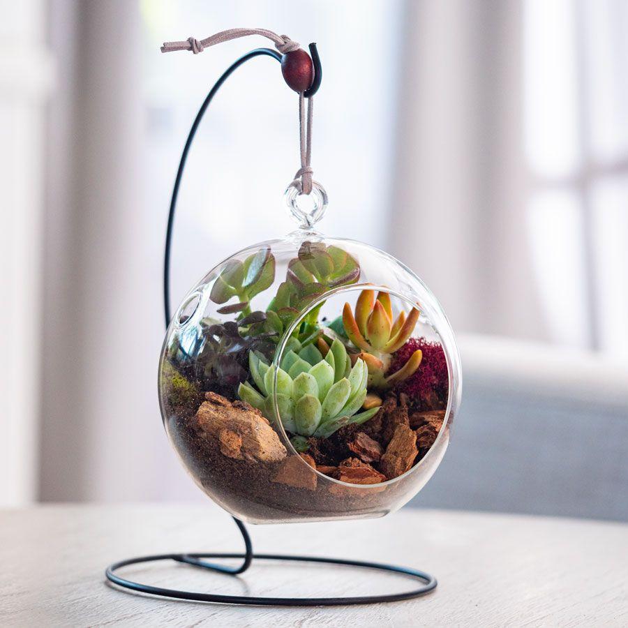 Hanging Bubble Succulent Garden Image