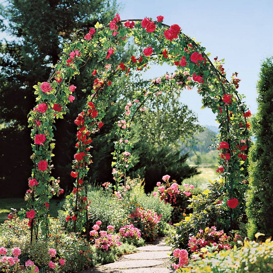 Garden Traditions Arbor From Park Seed