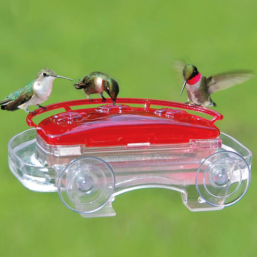 Jewel Box Hummingbird Feeder Image