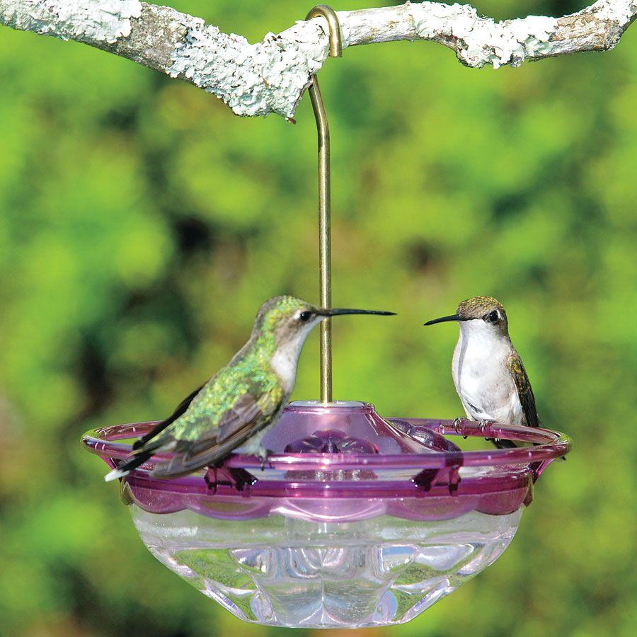 Humm Blossom Hummingbird Feeder Image