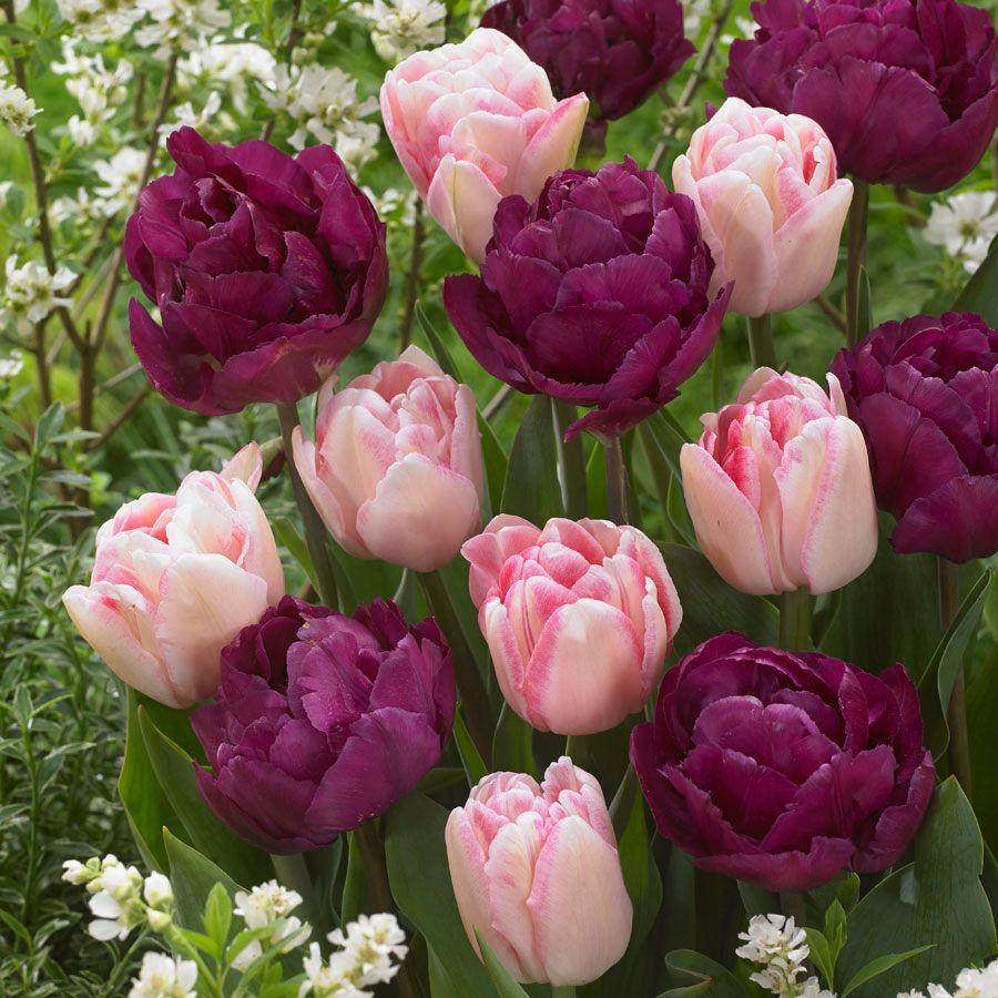Tulip Ballroom Blossoms Mix Image