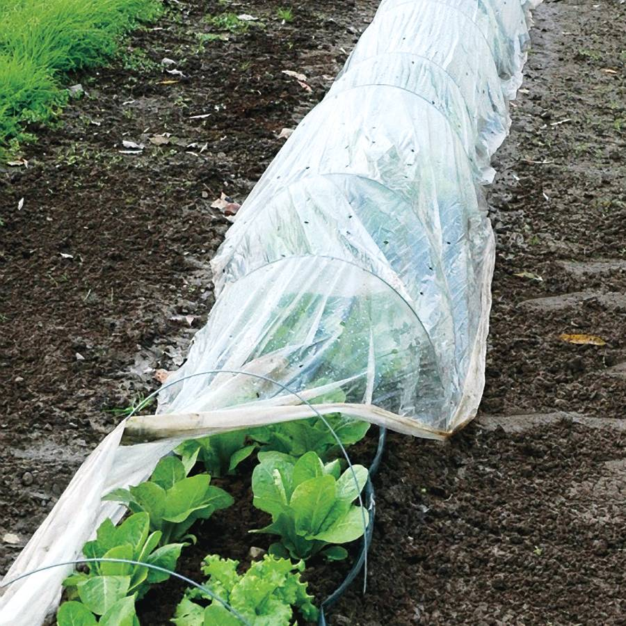 Garden tunnel cover and wire kit 50 ft from park seed for 50ft garden design