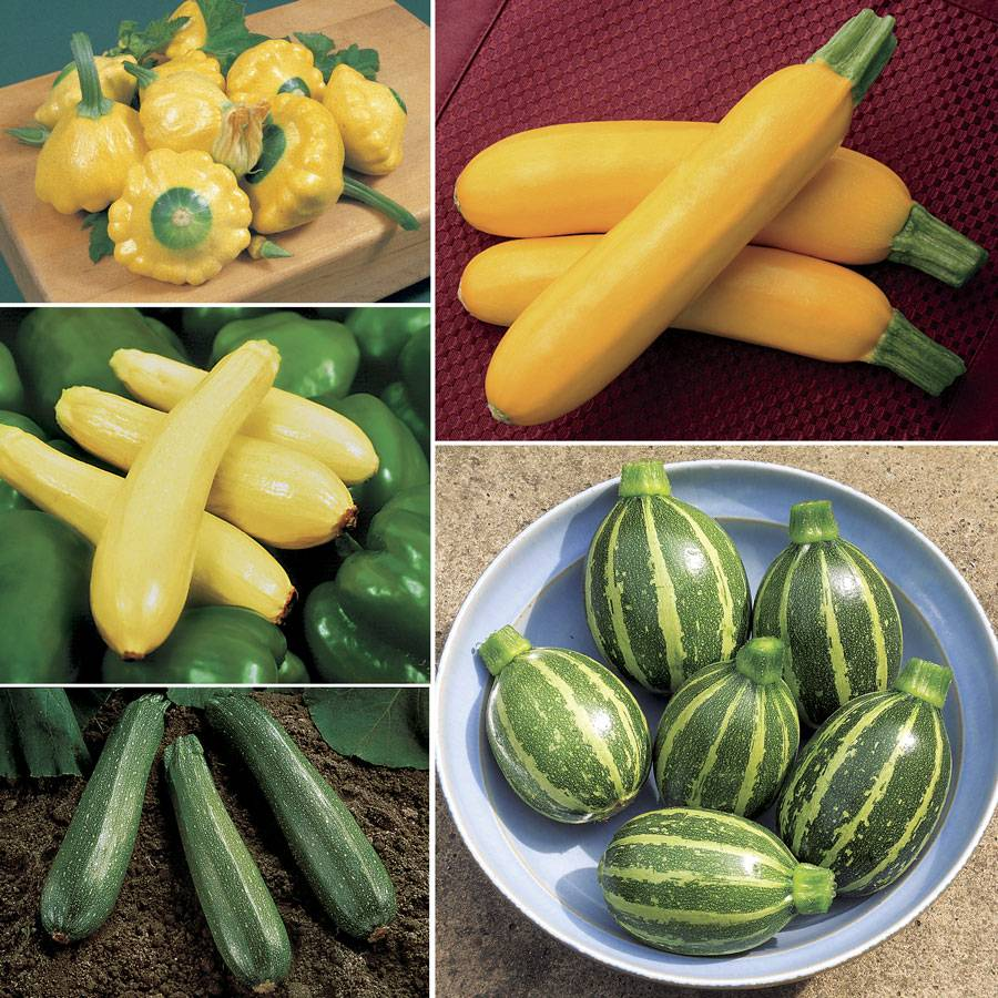 Our Best Squash Collection Image