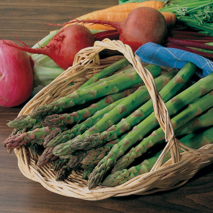 Asparagus 'Jersey Knight' Image