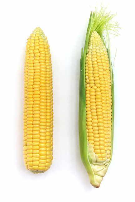 Early Sunglow Hybrid Corn Seeds Image