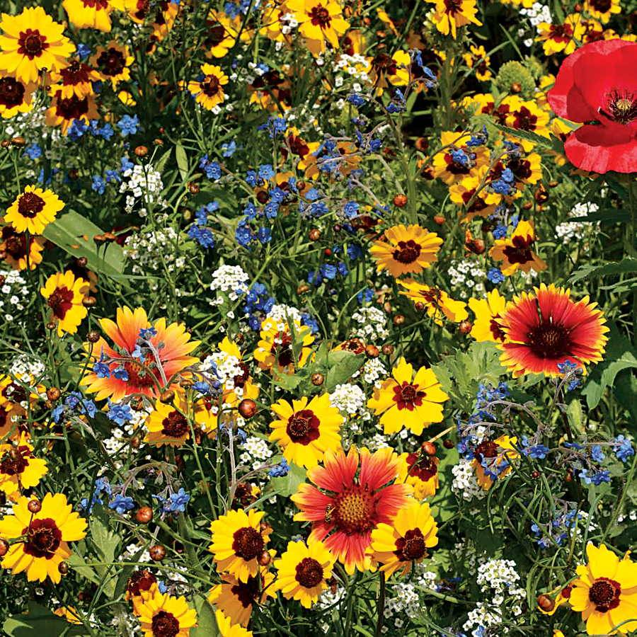 Bee buddies wildflower mix from park seed bee buddies wildflower mix mightylinksfo