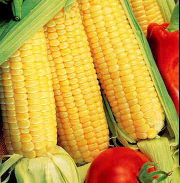 Growing Information Corn
