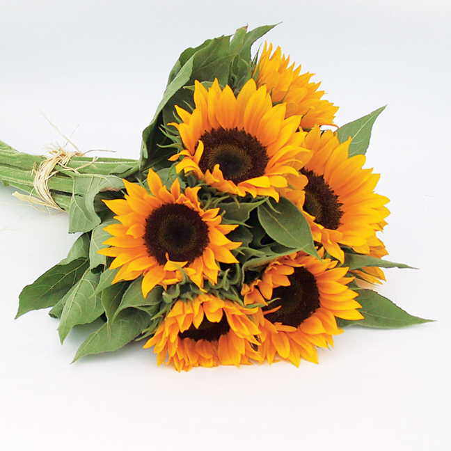 zohar organic sunflower seeds
