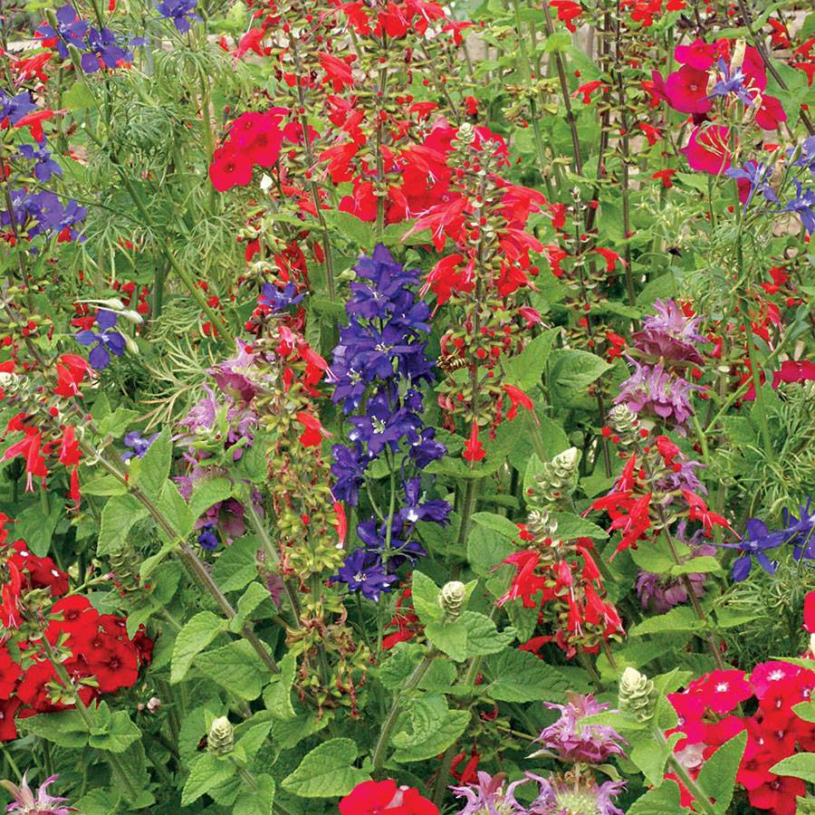 Hummingbird Wildflower Mix Seeds Image
