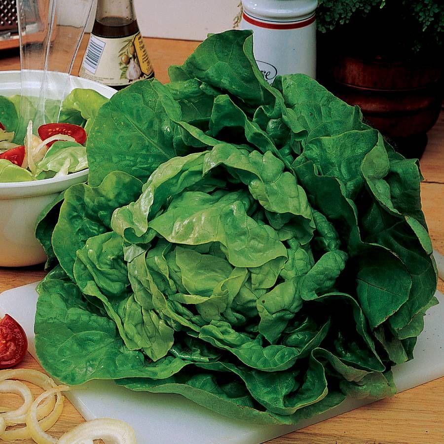 Buttercrunch Lettuce Seed Tape Image