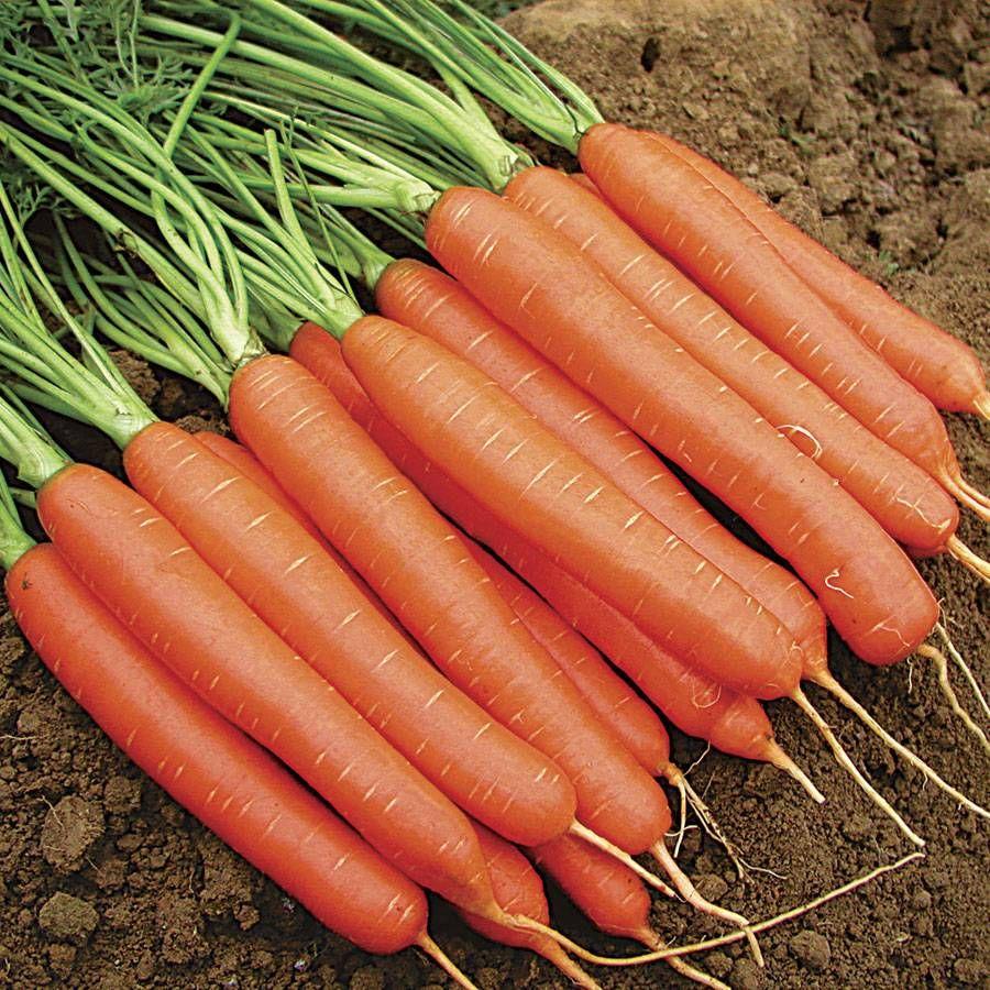 Merida Hybrid Carrot Seed Tape Image