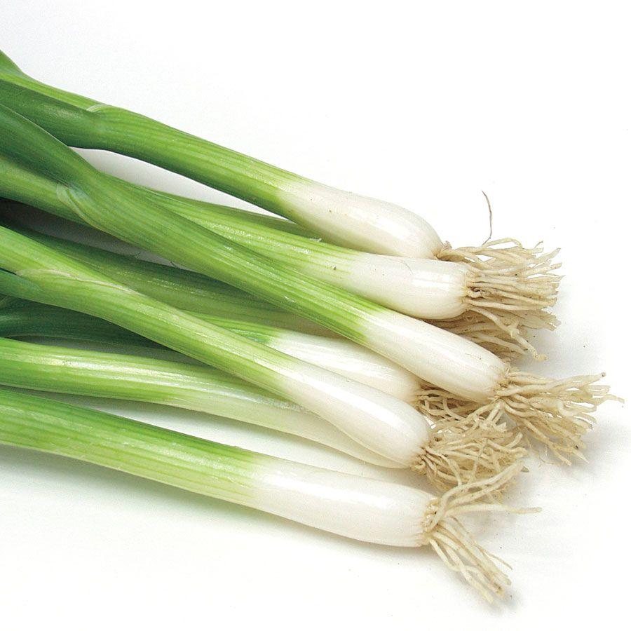 Damast Bunching Onion Seed Tape Image