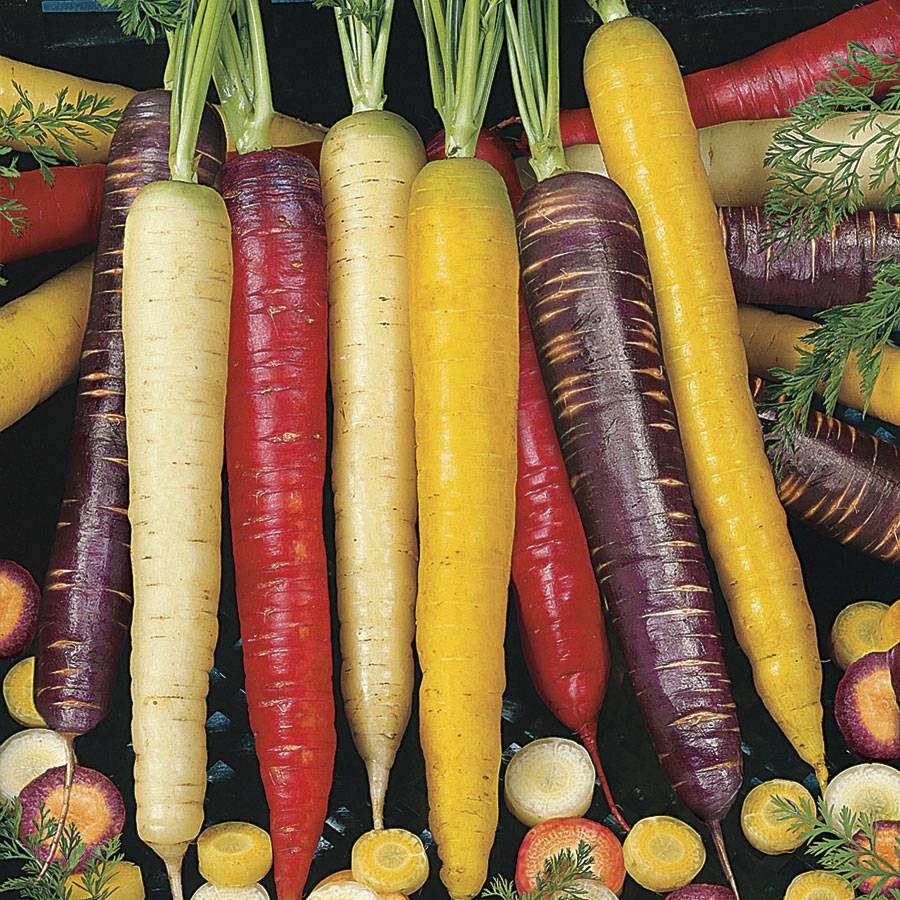 Rainbow Blend Carrot Seed Tape Image