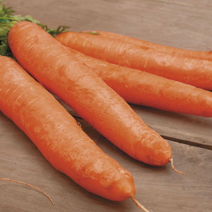 Little Finger Carrot Seed Tape Image