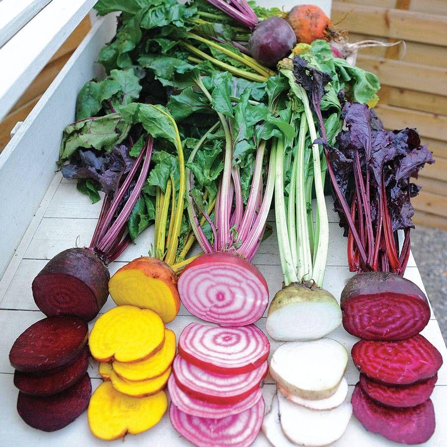Rainbow Mix Beet Seed Tape Image