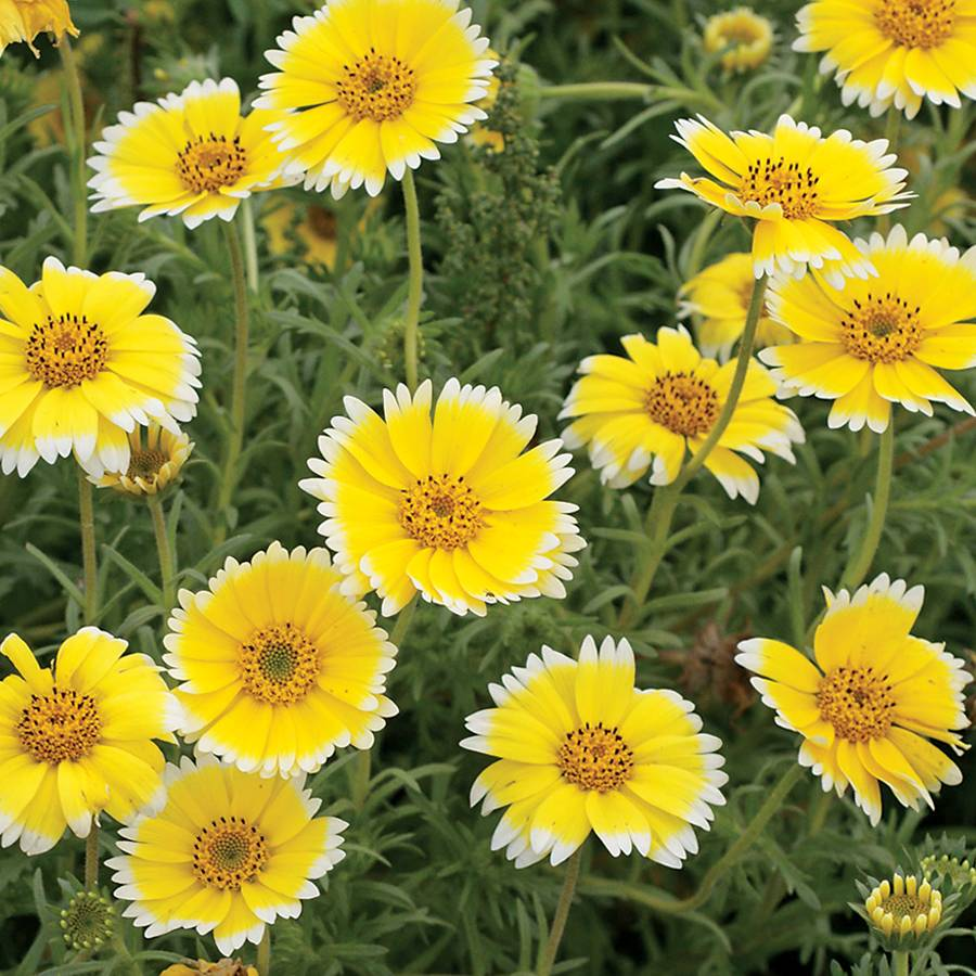 Wildflower Tidy Tips Image