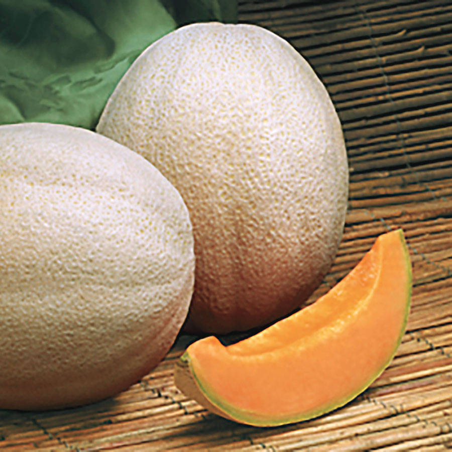 Aphrodite Hybrid Cantaloupe Seeds From Park Seed If you're in a colder region you can start cantaloupes are heavy feeding so the soil you plant them in needs to be prepared with that in mind. aphrodite hybrid cantaloupe seeds