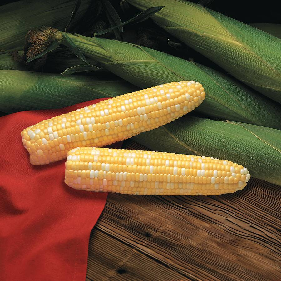 Primus Triplesweet Hybrid Corn Seeds From Park Seed