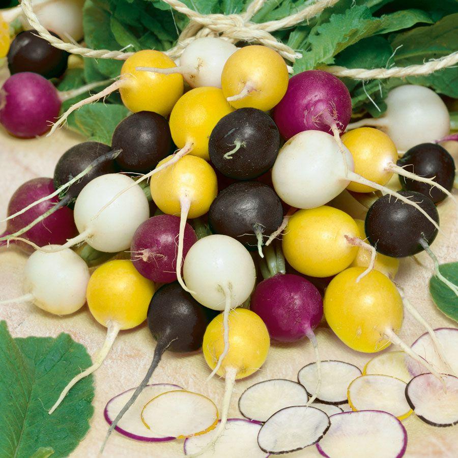Halloween Blend Radish Seeds Image