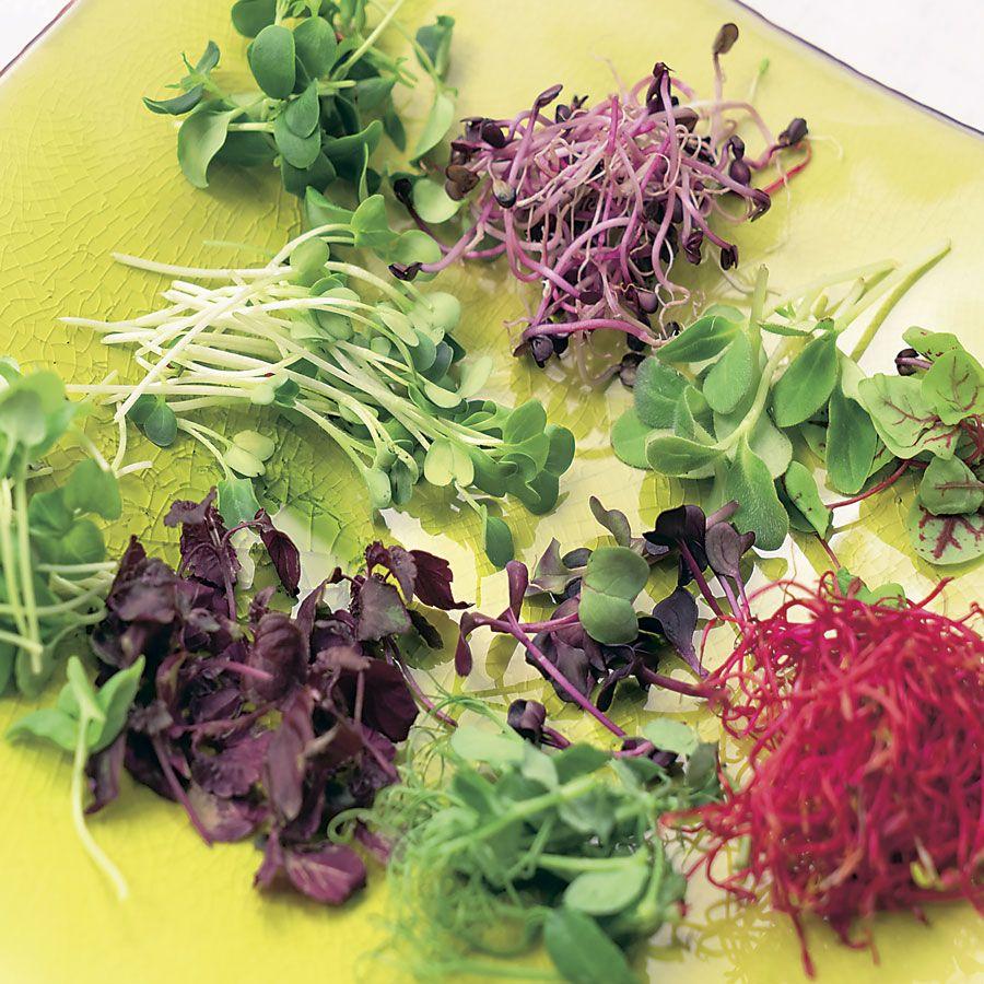 Old Mexico Mix Salad/Microgreens Seeds Image