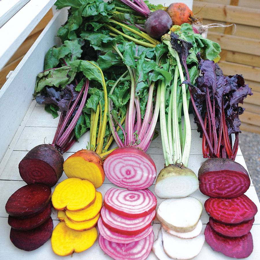 rainbow mix beet seeds from park seed
