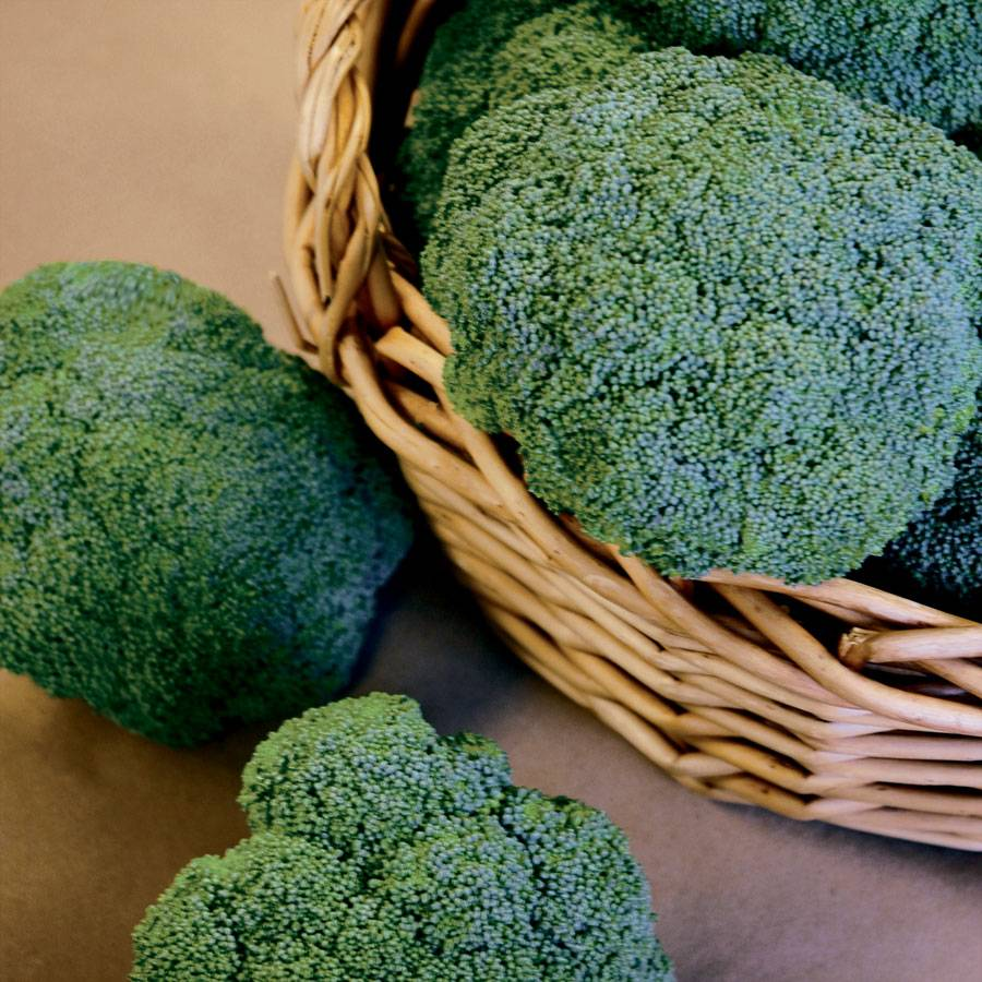 Castle Dome Hybrid Broccoli Seeds From Park Seed