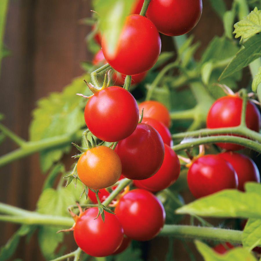 Nectar Hybrid Cherry Tomato Seeds Image