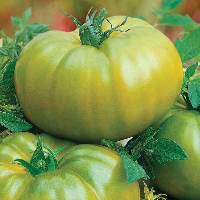 Exclusive Heirloom Green Hybrid Tomato Seeds